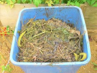 堆肥を投入