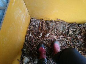 堆肥は踏み踏みが大事。