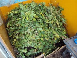 剪定枝堆肥②