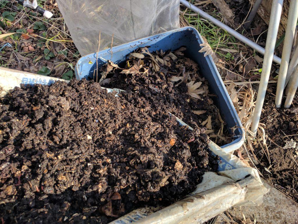 ミミズ堆肥を落ち葉に入れます