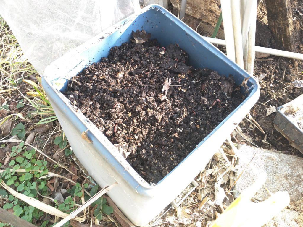 ミミズ堆肥を被せました